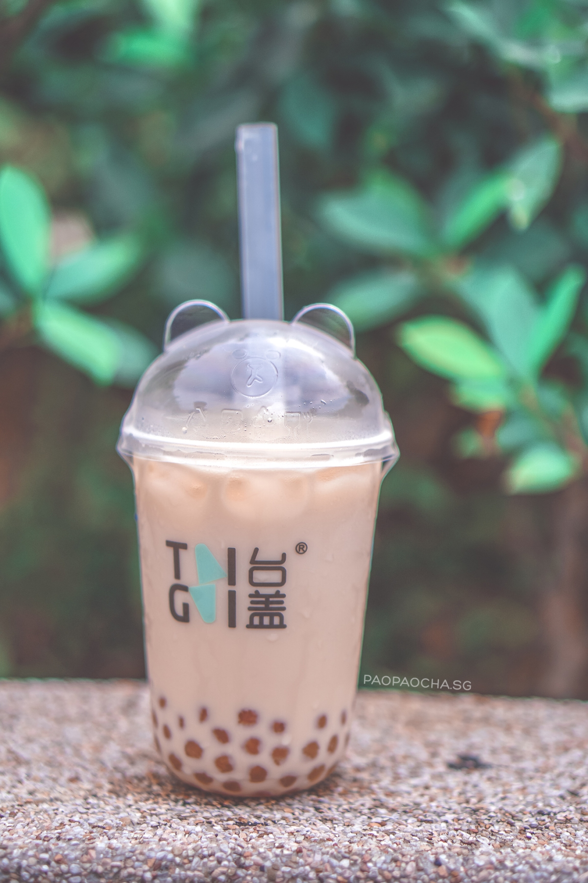 Taigai Beary Oolong Milk Tea with Golden Pearls